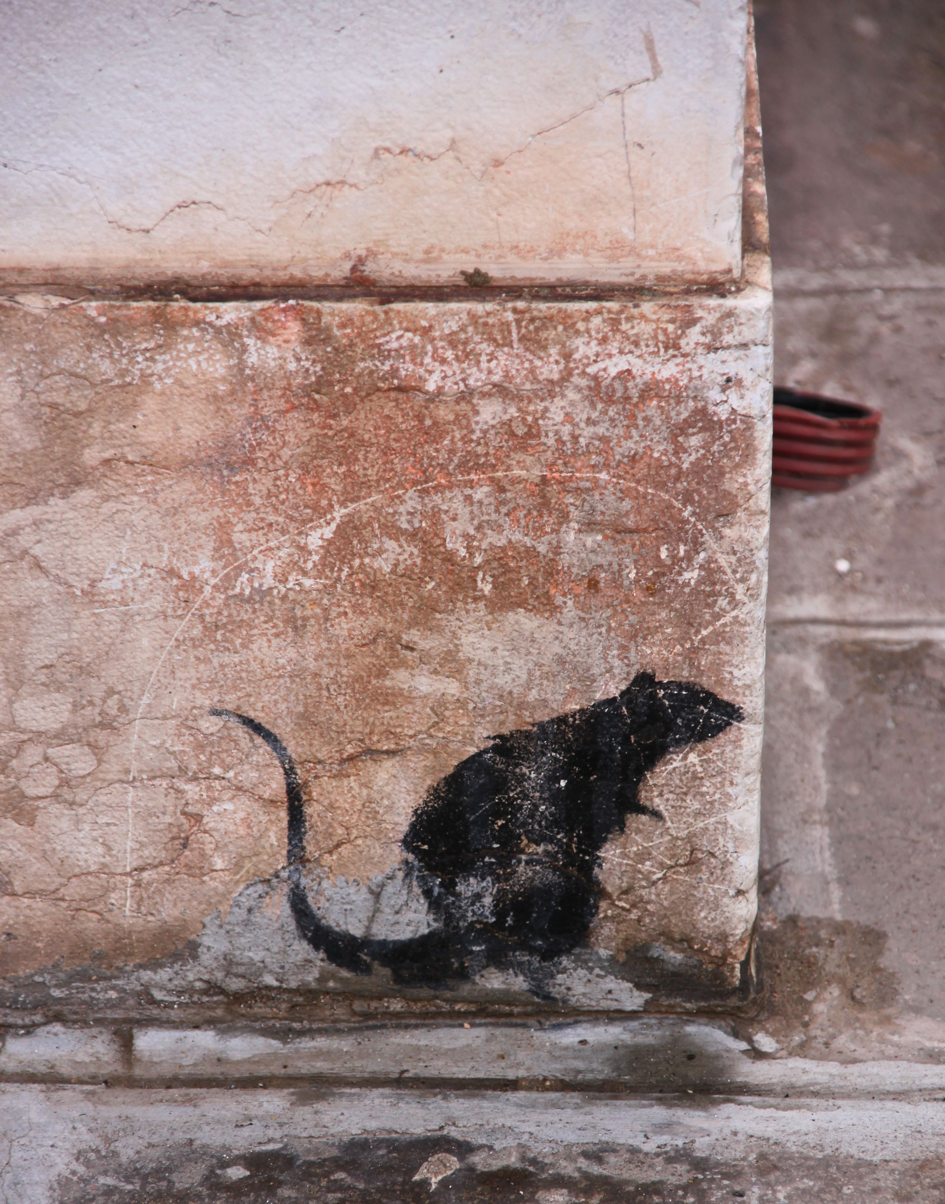 A Banksy-style rat on a wall in Venice refers to estimates that there are 6 rats in Venice for every human