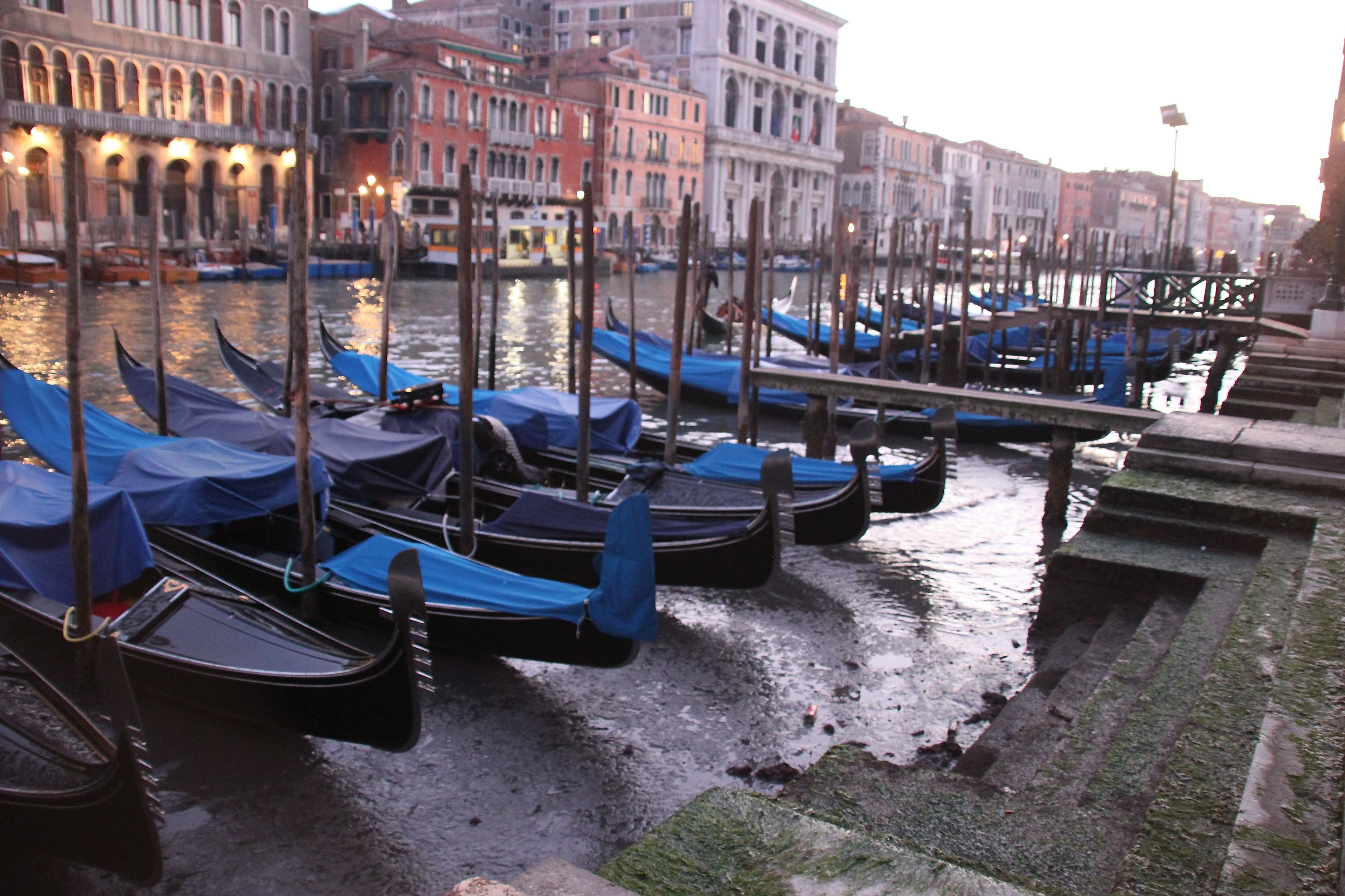Gondole moored up on the muddy banks of the Grand Canal