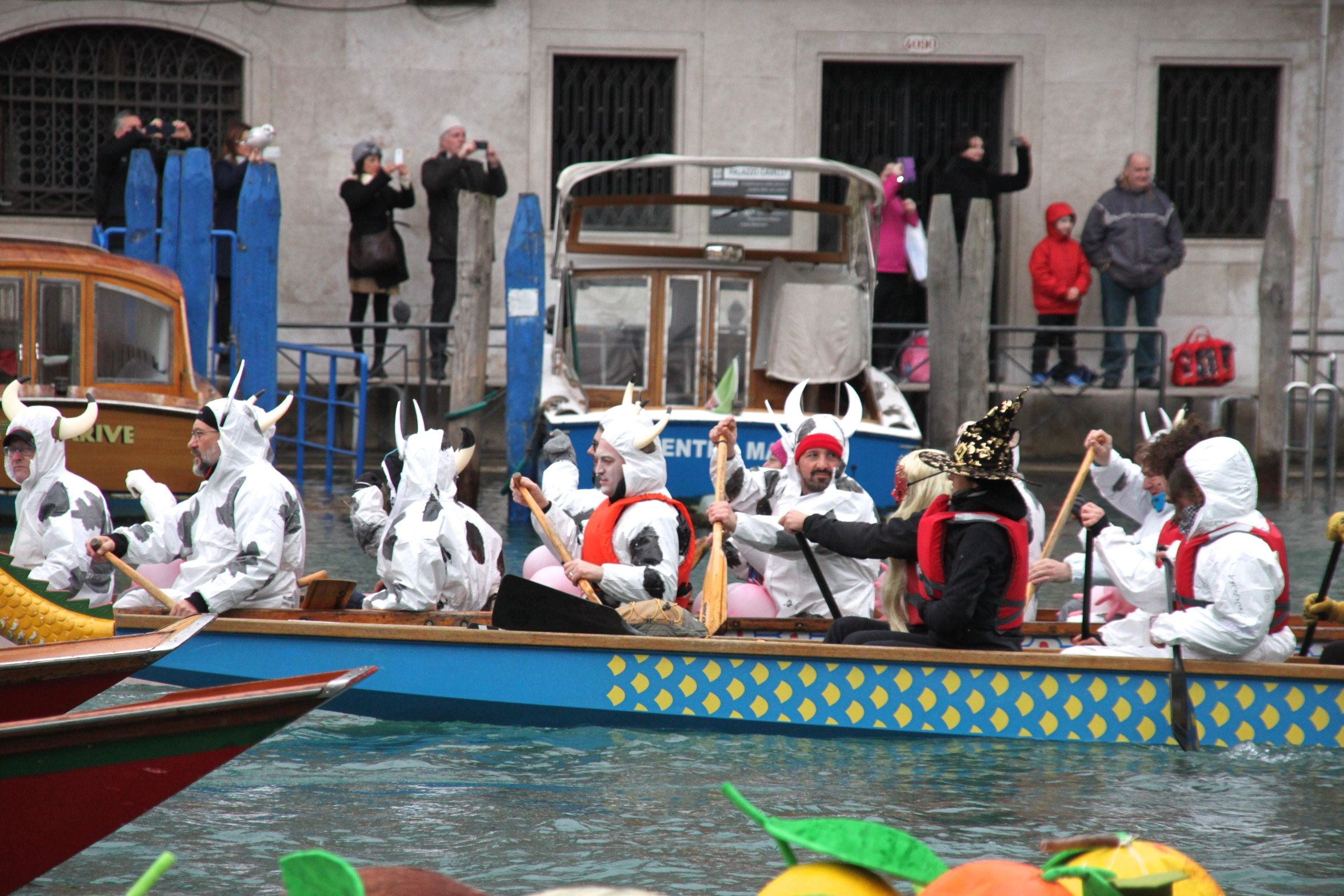 Venice Carnival Water Parade - Cows, rowing down the Grand Canal in Venice? Udderly ridiculous!!