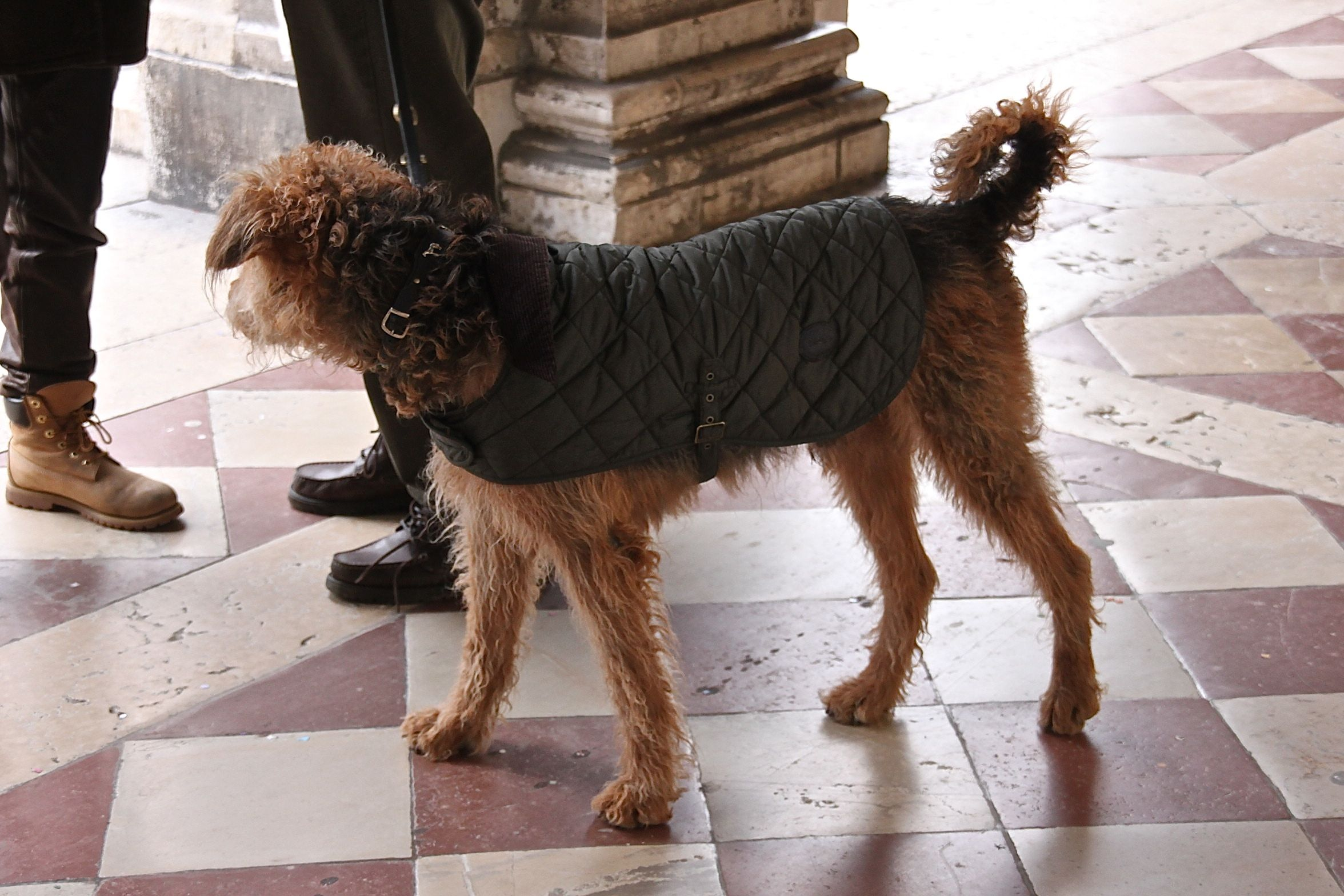 A classic quilted jacket for the hound about town