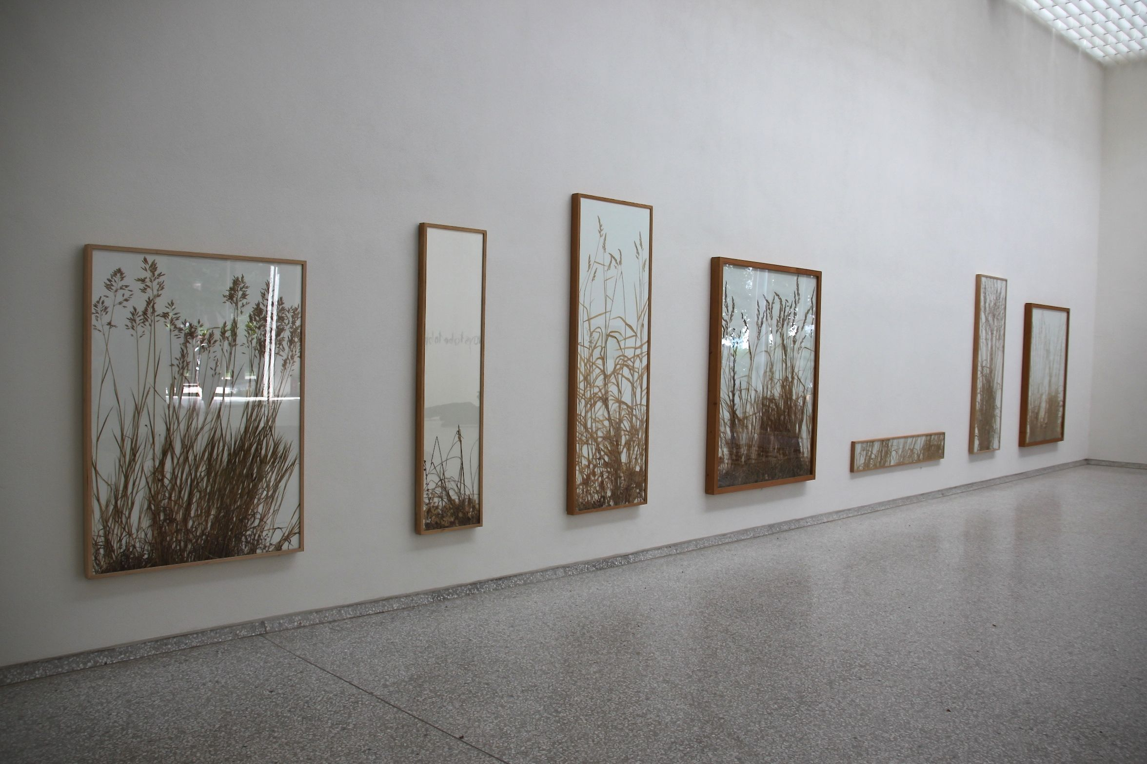 Giant grasses collected from around the Venice lagoon form beautiful pictures at the Dutch pavilion