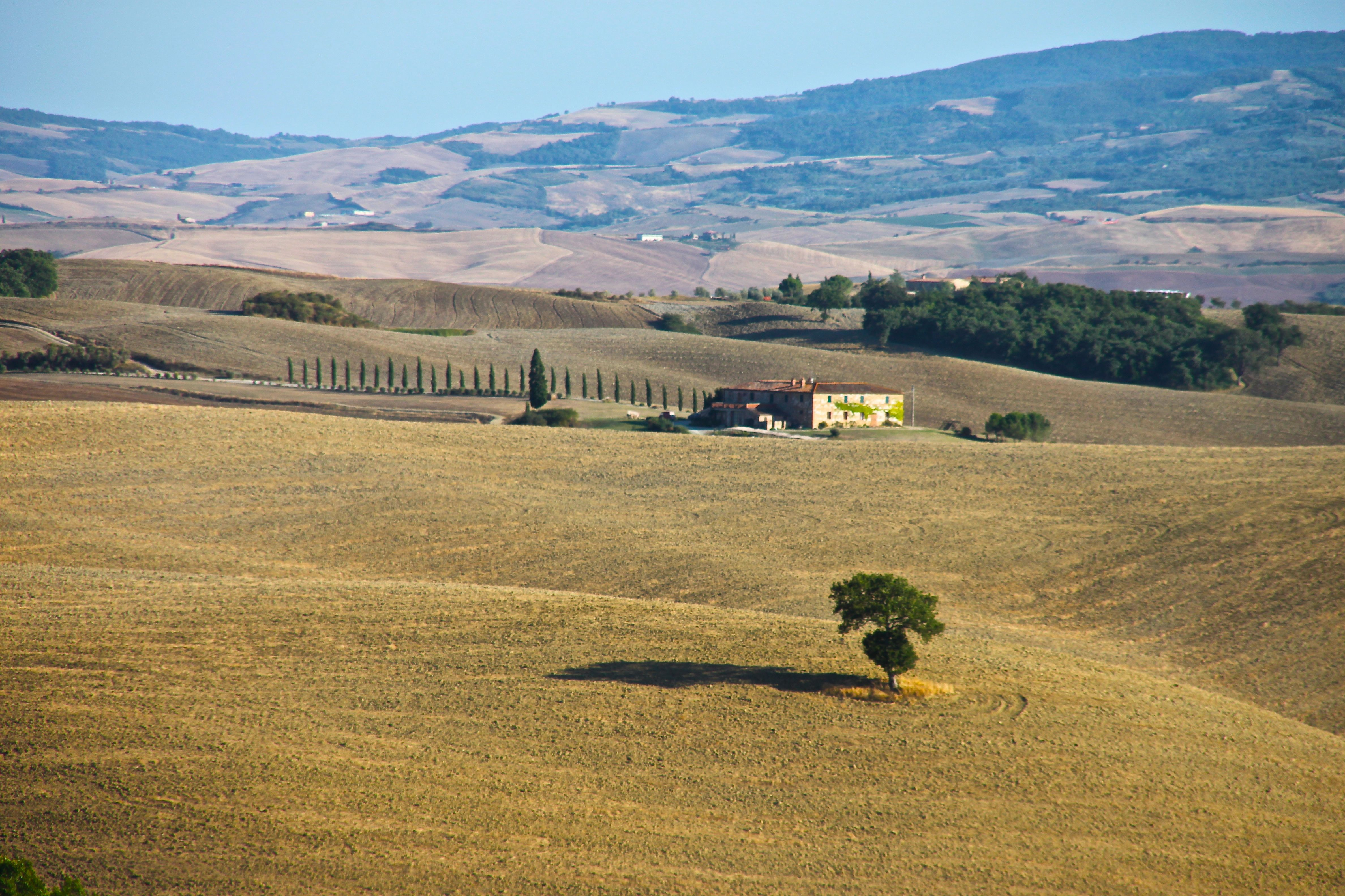 Tuscany's rolling hills offer a perfect spot to propose